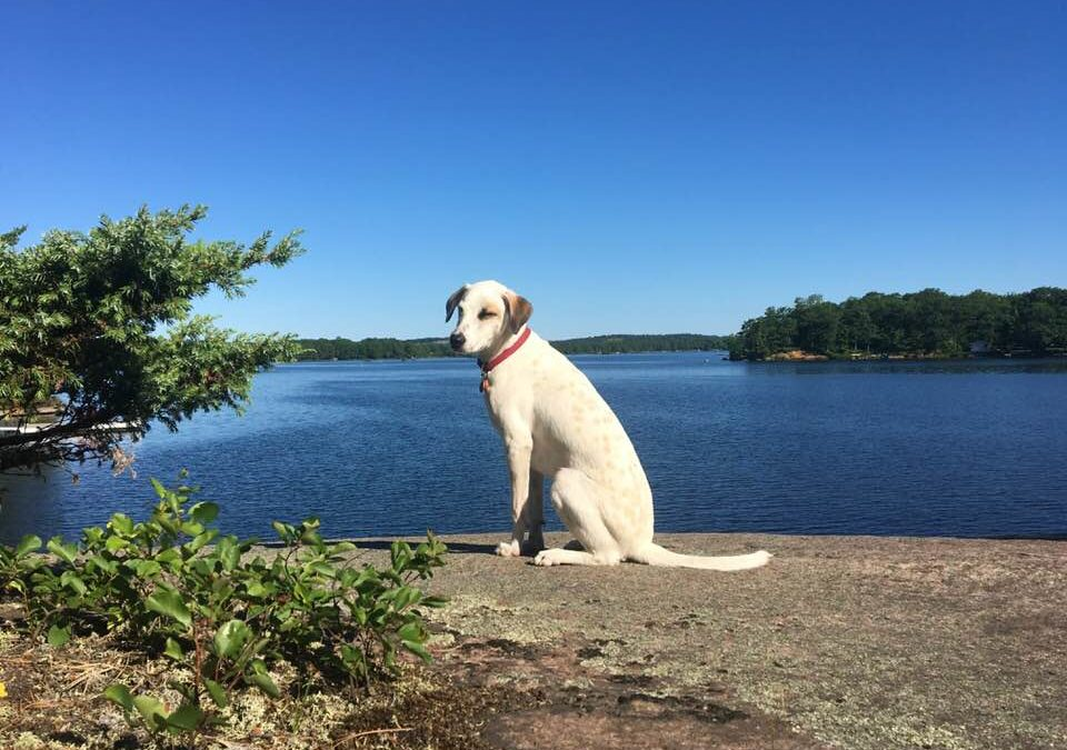 Lessons from my Dogs: Reflections on Animal Rights and Dog Training
