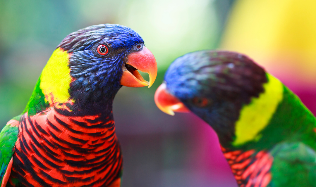 Peer Support and Networking for Parrot Behavior Consultants: An Interview with Robin Horemans