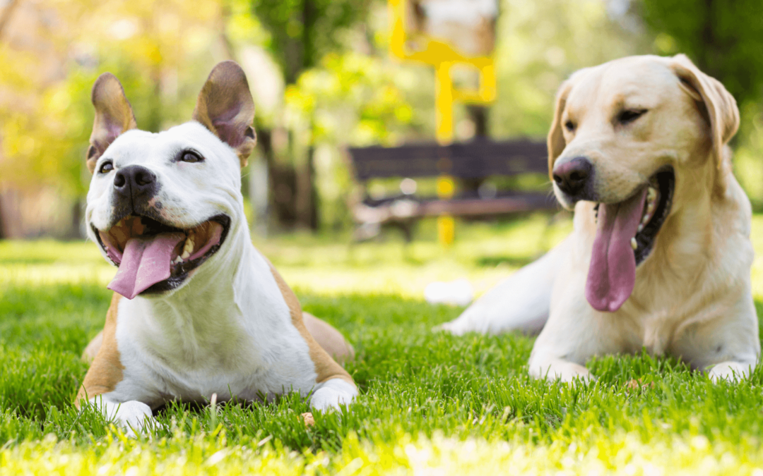 Using Research-based Protocols with Shelter Dogs