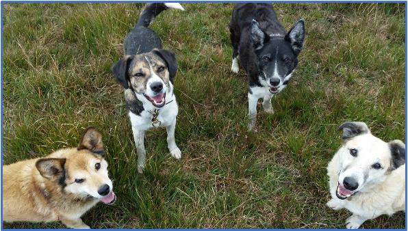 Building Confidence in Foster Dogs Through Passive Observation