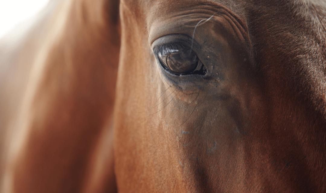 How Behavior Modification Can Help Equine Veterinary Practice
