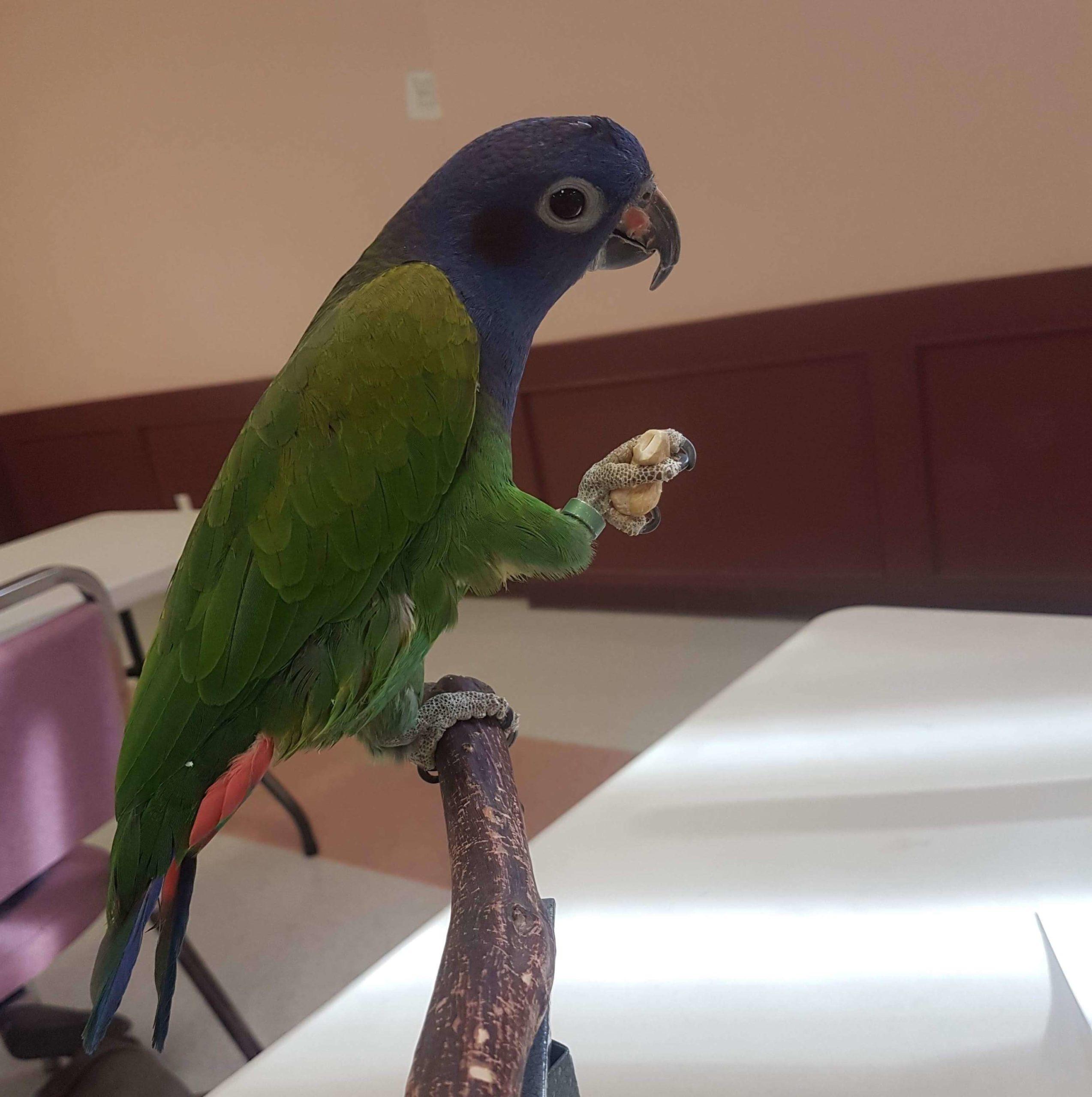 Bird Enjoying a treat