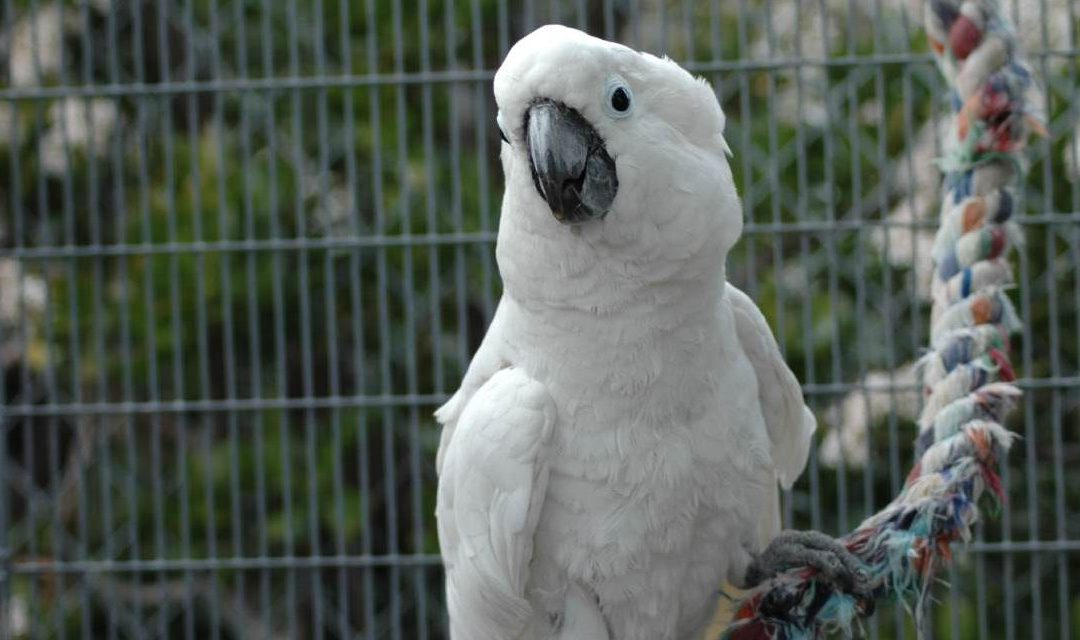 Helping Pet Store Parrots Live Their Best Lives