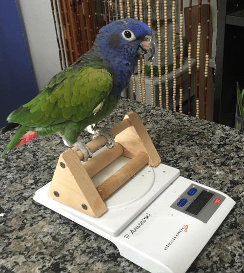 Scale training