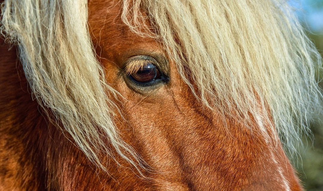 Reflections on Pain in Equine Behavior