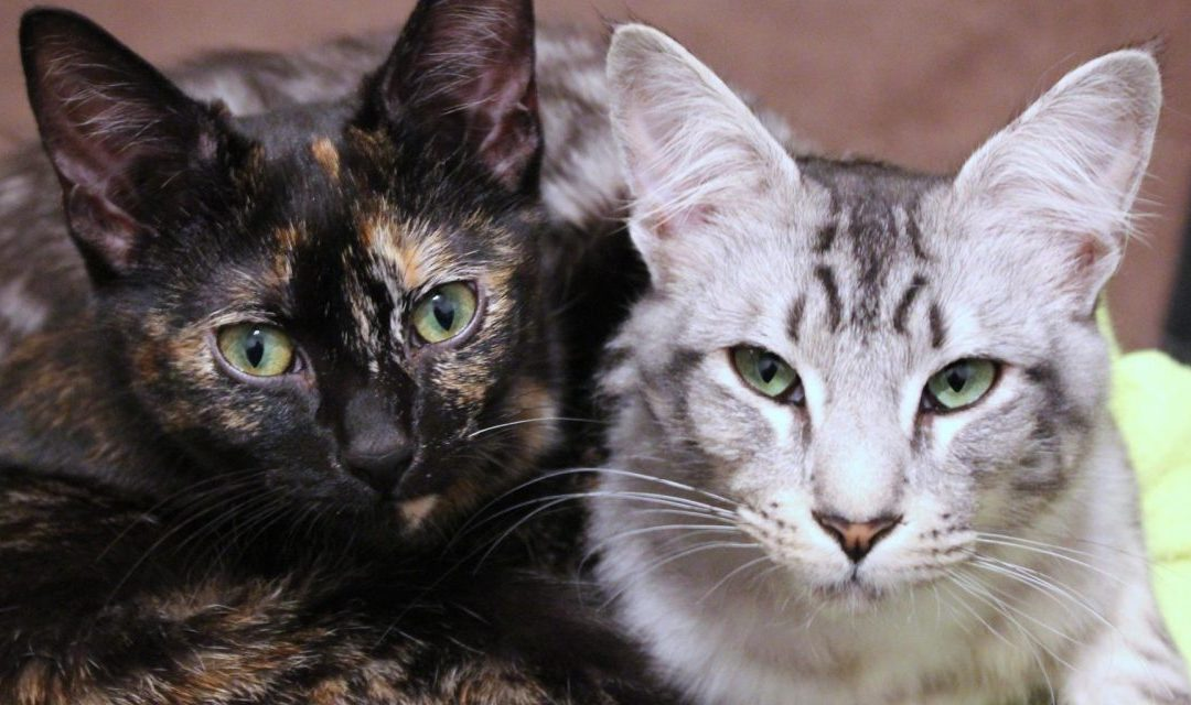 Using Rotation to Reduce Stress in Multi-Cat Situations