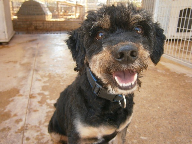 Shelter Canine Behavior Evaluations: Why The Animal Rescue League of Boston Uses MATCH-UP II