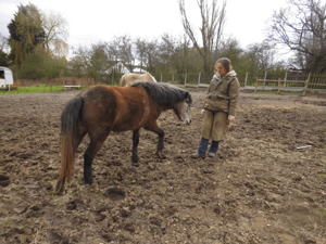 Figure 4: A lovely session with a semi-feral foal.