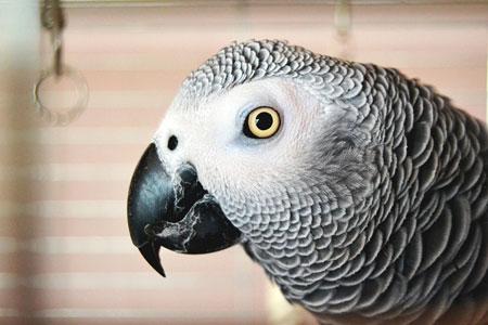 Spotlight on Research: Parrot Enrichment