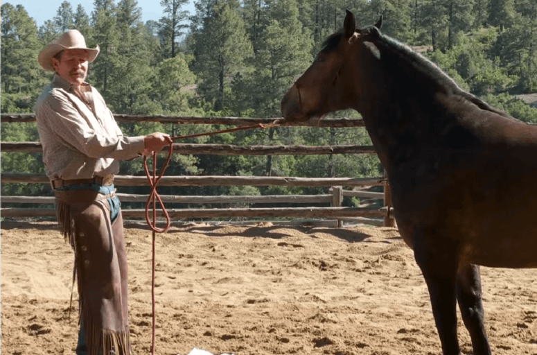 Parelli applying pressure to the halter with both hands