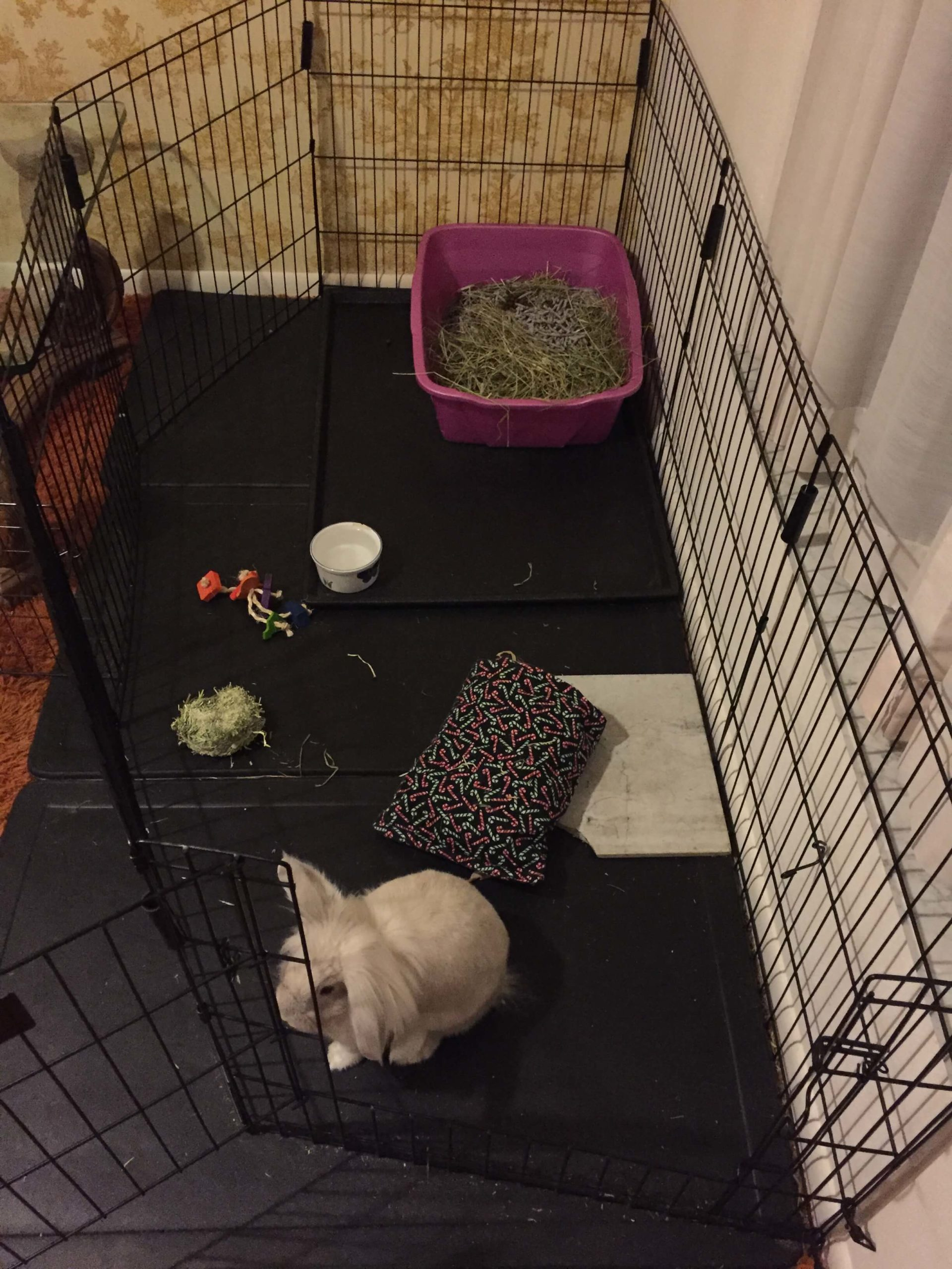 foster rabbit setup