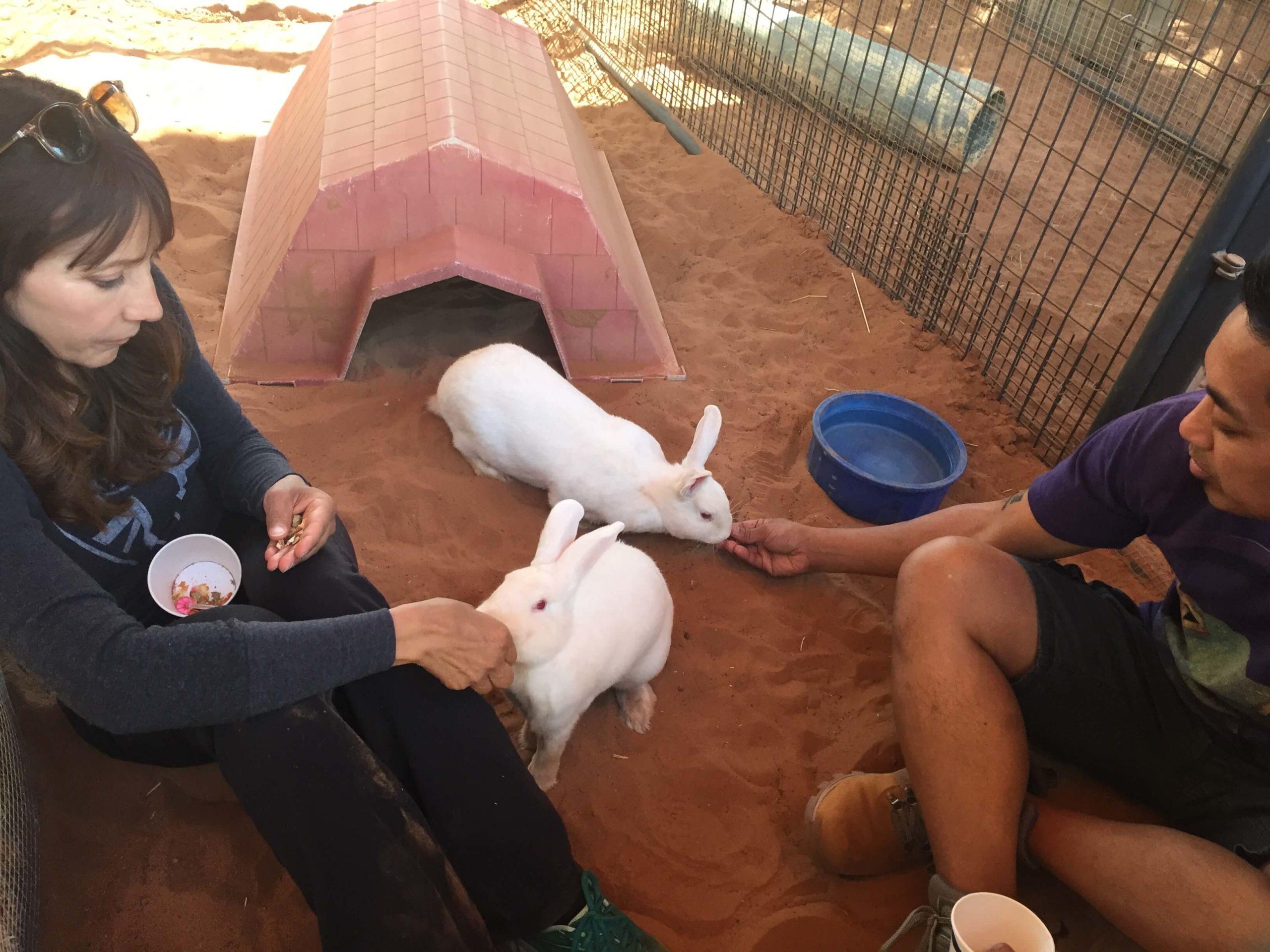 rabbit training setup