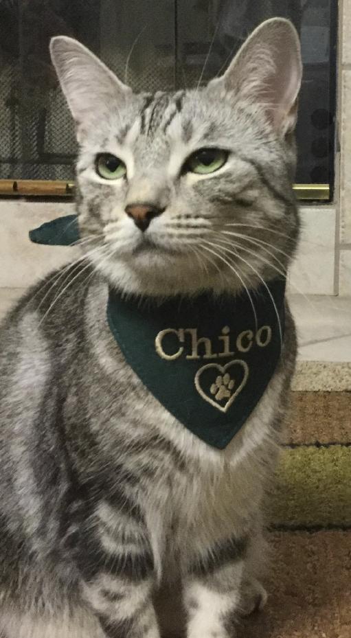 Chico, by Cheri Cox