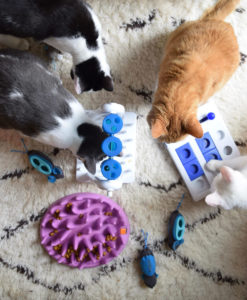 A variety of the feeder toys in KittyDreamHouse