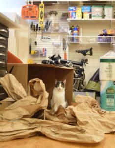 Beagle in a good old-fashioned cardboard box