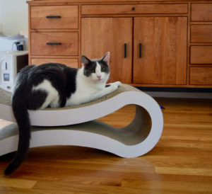 Beagle modeling ahorizontal scratching surface