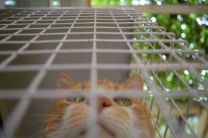 Darwin keeping an eye on the neighbors in the smallcatio