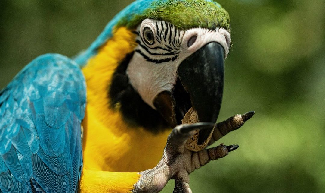 Diet and Behavior in Companion Parrots