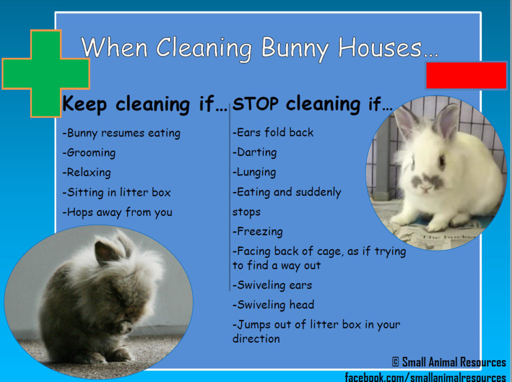 Cleaning Bunny Houses