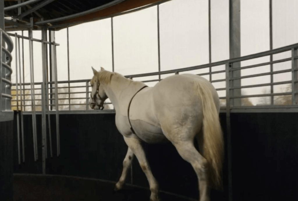 Behaviors seen: Tail clamped under the hind quarters, muscular tension accompanying tail clamping