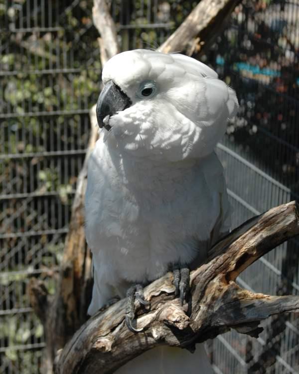 White cockatiel named CasperToo
