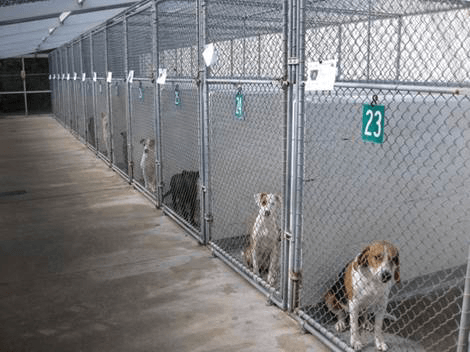dogs in animal shelter