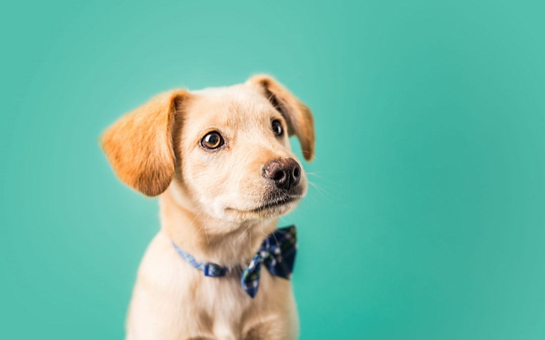 Should Play Be Part of a Puppy Kindergarten Class?