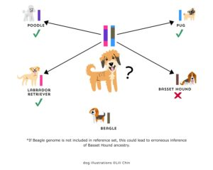 Figure 9. An ancestor can be inferred only if the relevant genome is present in the reference set.