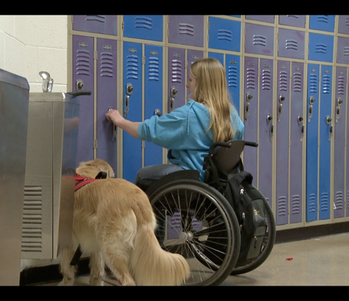 Service Dogs, Students, and Environments They Access