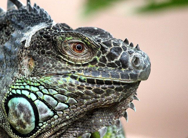 Behavior Consulting for Reptiles