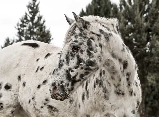At the Foot of It All: Hoof Care and Behavior Modification