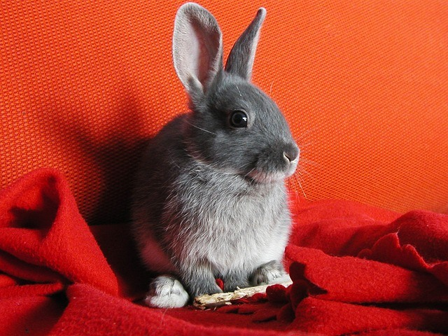 Spotlight on Research: Rabbits in Shelters