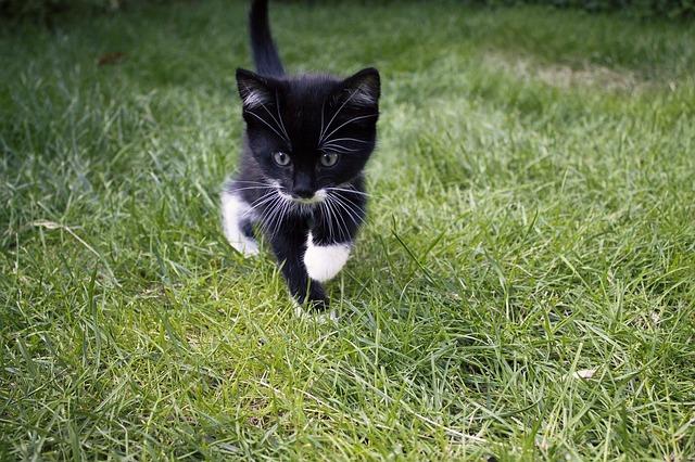 """Cat Training Corner: Training a Kitten to """"Go to Box"""""""
