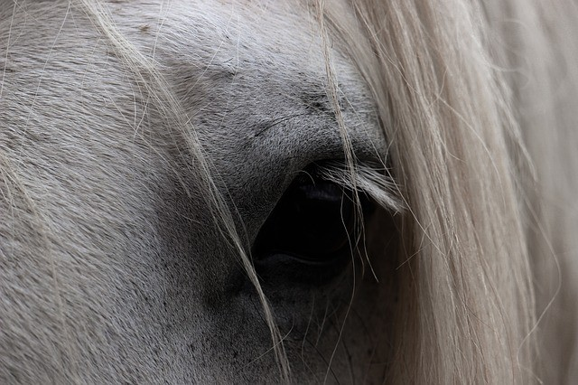 Why Train Voluntary Cooperation in Horses?