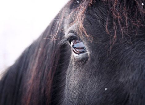 Relapse of Conditioned Fear in Horses: The Four R's