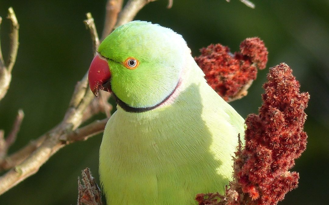 Ethological Considerations in the Care of Companion Parrots