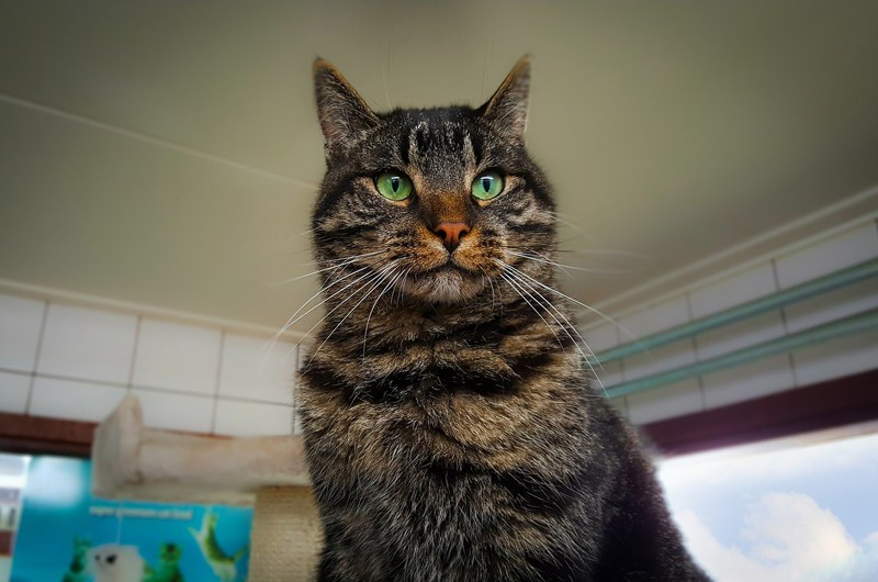 Housing Cats in Shelters