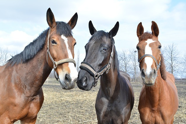 Group Living for Equines