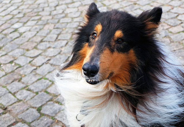 The Cognitive Revolution and Everyday Dog Training: Cognitively Modified Counterconditioning™