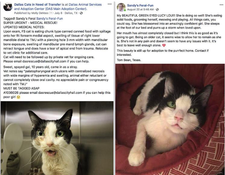 Facebook Senior Cats