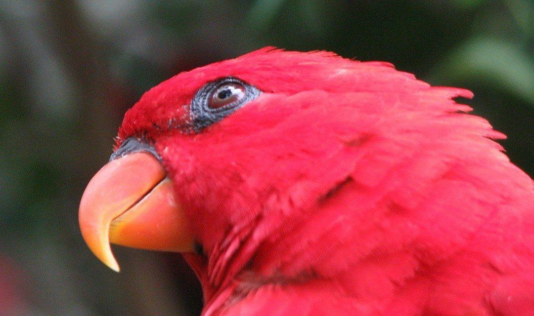 The Human-Avian Bond