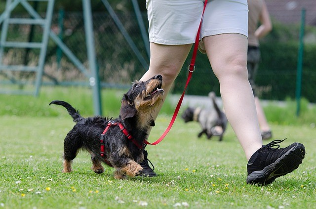 Compliance and Manipulation in the Dog Training World