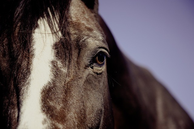 Clicker Training for Horses: A Video Series