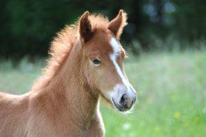 What Do Trainers Know About How Horses Learn?