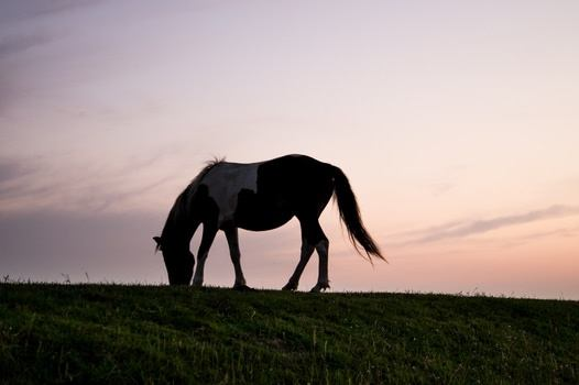 Health And Welfare Benefits Of A Varied Diet For Horses