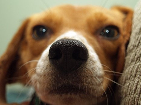 Canine Neurobics: A Curriculum to Improve Brain Health