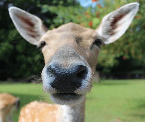 Pawsimony: Oh, Deer