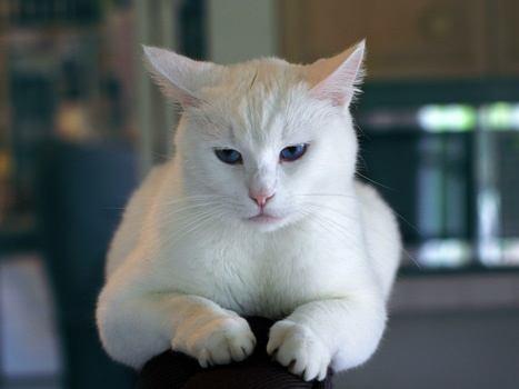 FeBARQ: Applied Research on Domestic Cat Behavior