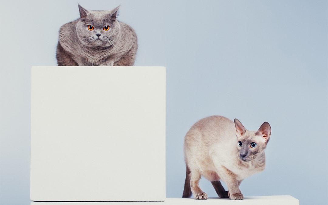 Cat Reintroductions via Online Consultations