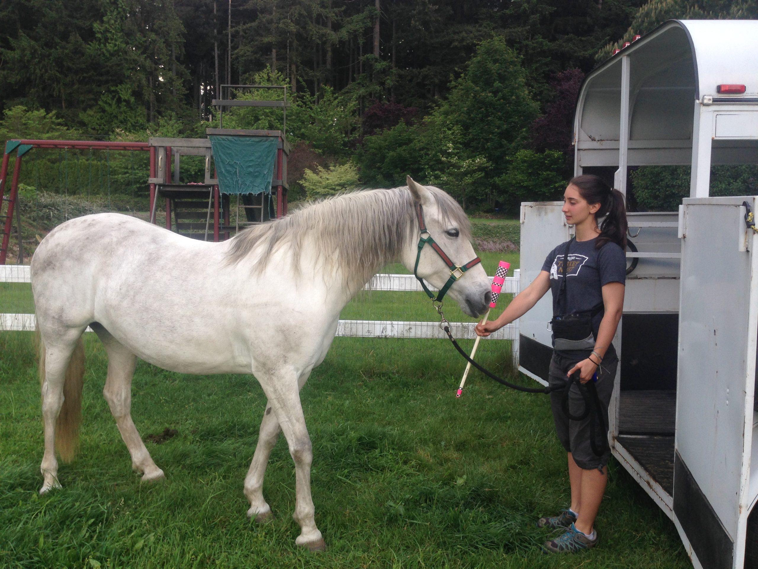 Foster-Horse-Target